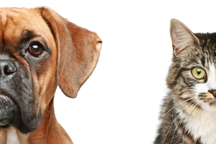 What Your Pet Choice Says About Your Personality