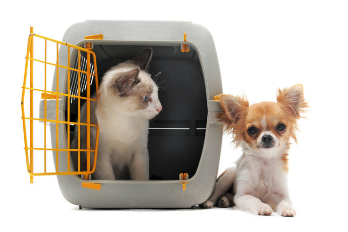 Air Travel with Dogs and Cats, Part 2
