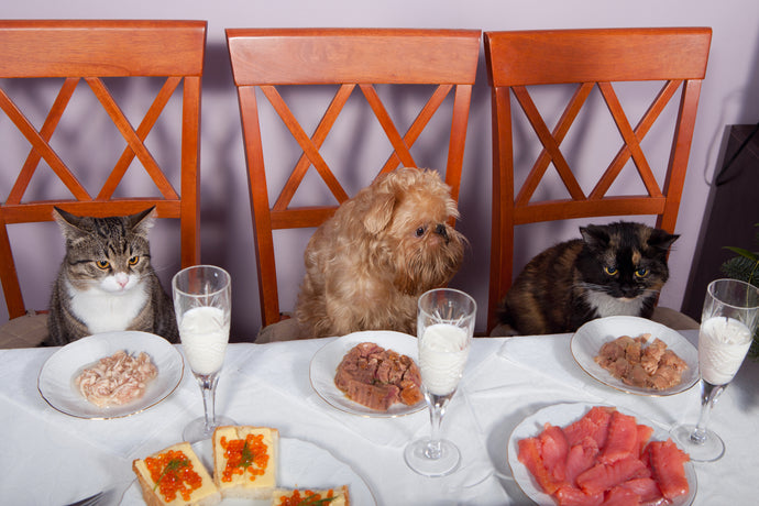 Safe Thanksgiving Feasts for Cats and Dogs
