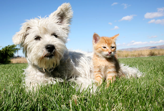 The Beginner's Guide to Pet Probiotics