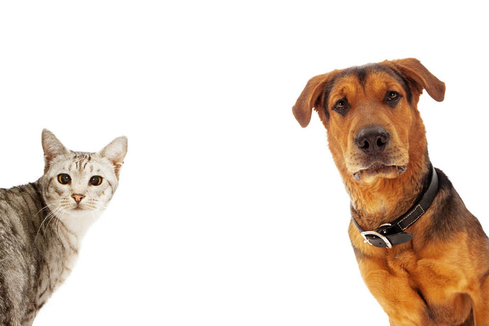 How To Calculate Your Dog's Or Cat's Age in Human Years - Part One