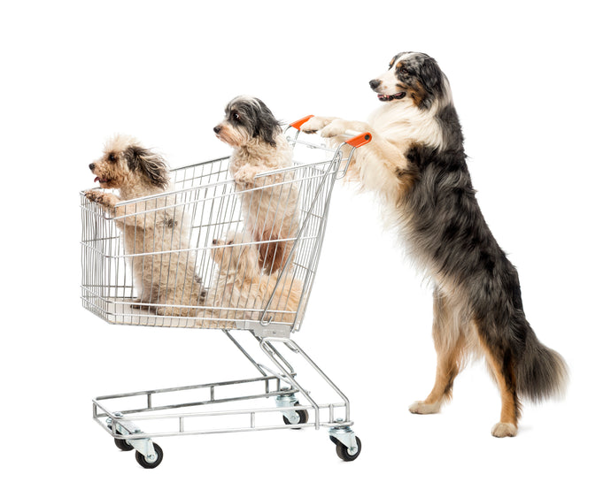 Dog-Friendly Retail Chains: Some Of These May Surprise You
