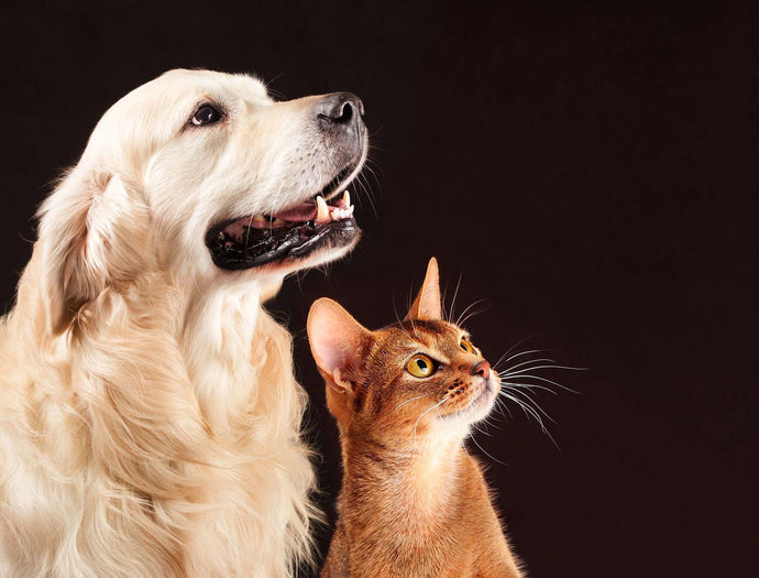 8 Ways to Celebrate Your Pet for World Pet Memorial Day