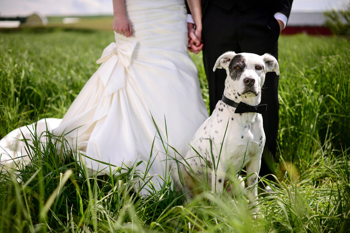Taking Fido to a Wedding? Here's What You Need To Know