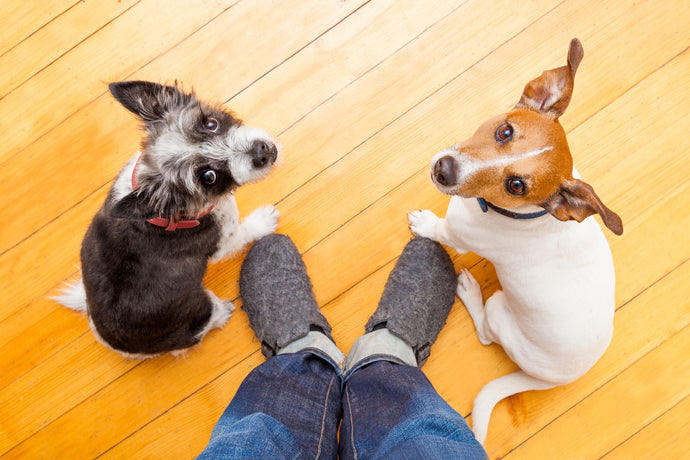 More Essential Commands To Teach Your Dog