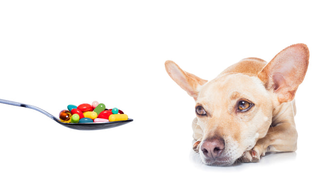 Vitamins Dogs Need And Why