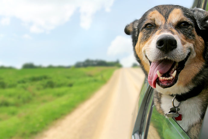 Going on a Road Trip with Fido, Part 2