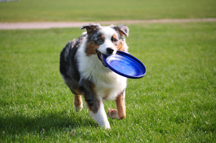 The Right Amount Of Exercise For Your Dog's Health And Lifestyle, Part Four
