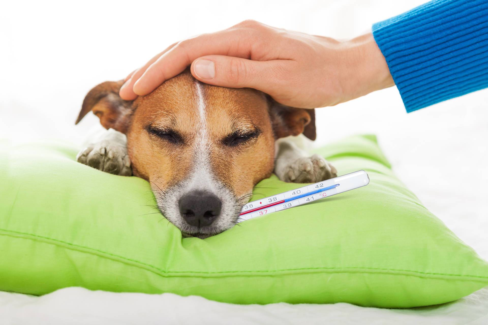 6 Most Common Deadly, but Preventable Dog Illnesses (Part Two)