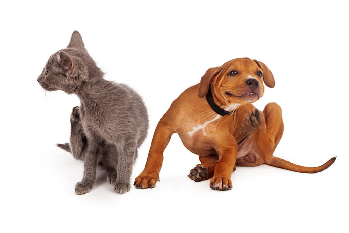 The Everything Guide to Fleas & Your Pet