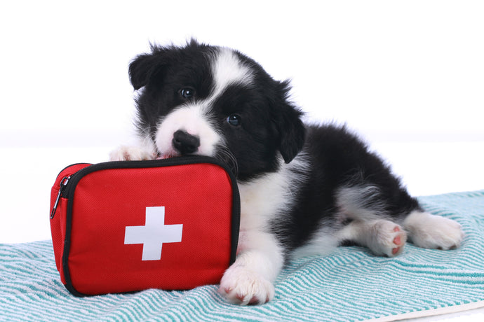 How To Create A First Aid Kit For Your Dog