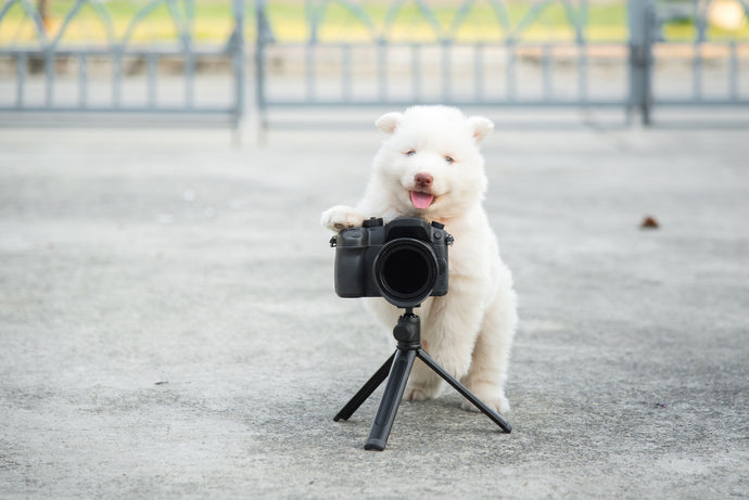 Pro Tips On How To Take Insta-worthy Pet Photos, Part 3