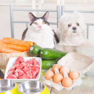 Pet Food Labels: Guide For Informed Dog Guardians (Part Three)
