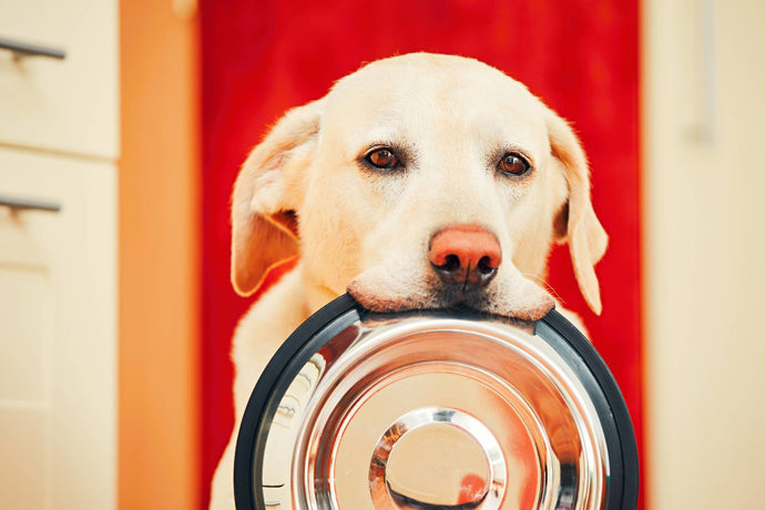 Let's Talk About Food Allergies And Our Dogs