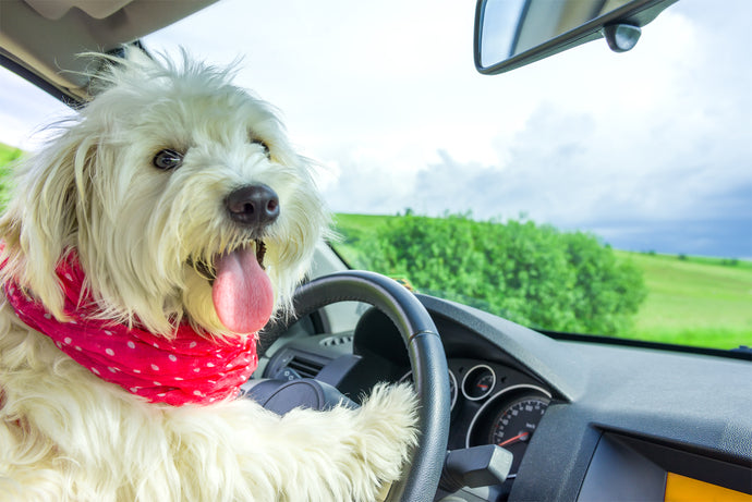 Road Tripping With Your Dog, Part 1