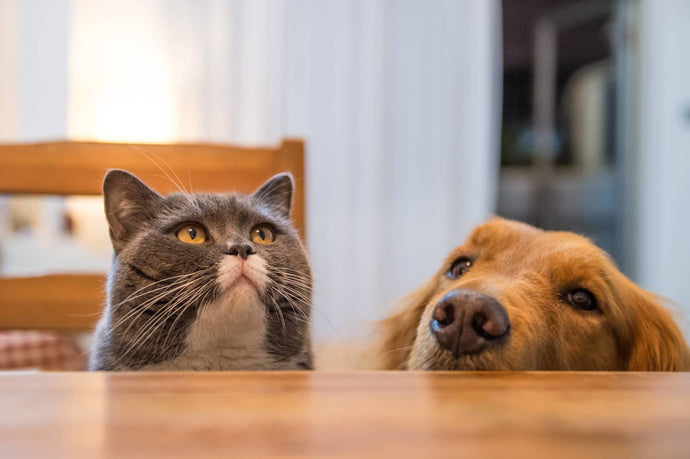 8 Thanksgiving Feast Staples You Can Share With Your Pets!