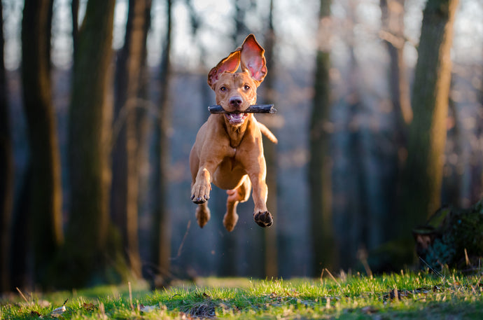 The Right Amount of Exercise for Fido's Breed, Part One
