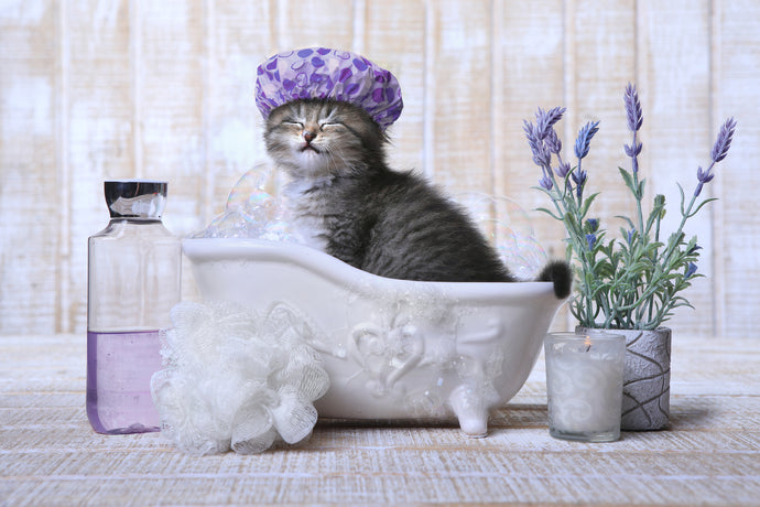 Fact or Myth: Do Cats Hate Water?