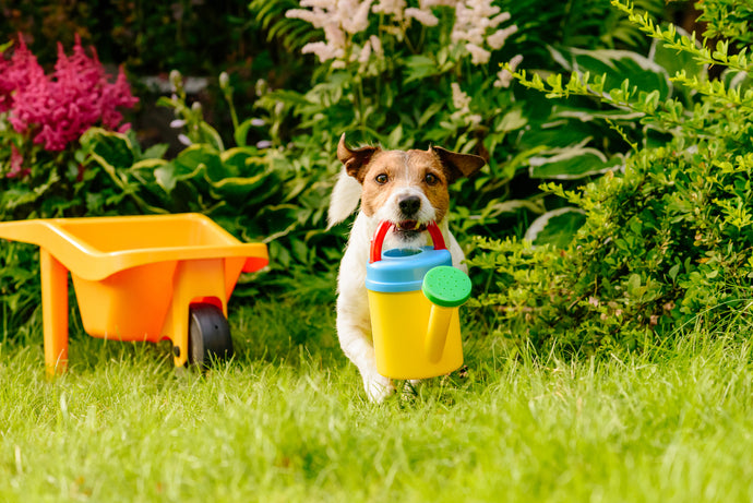 Safe Plants That Are Non-Toxic To Dogs