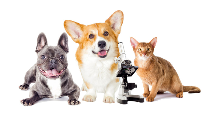 A Primer on Pet Vaccines, Part One