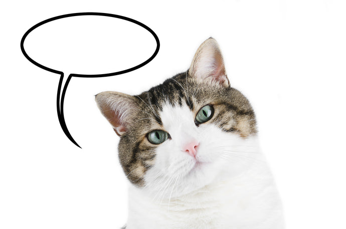 Cat Communication: Are You Listening?
