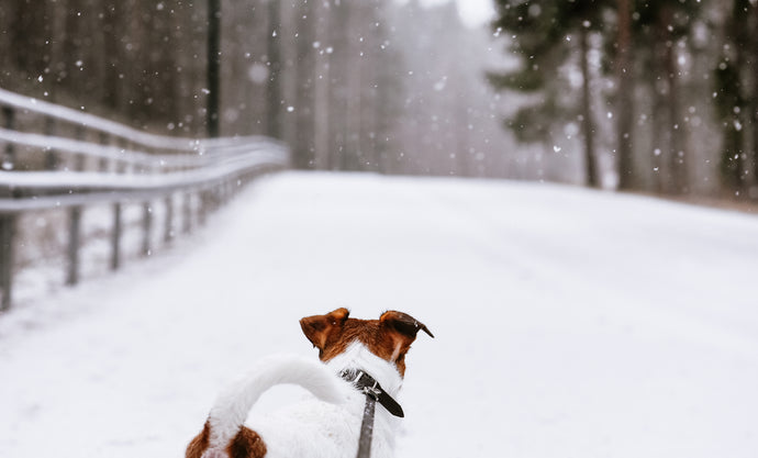 Winter Weather Safety Tips for Your Dog