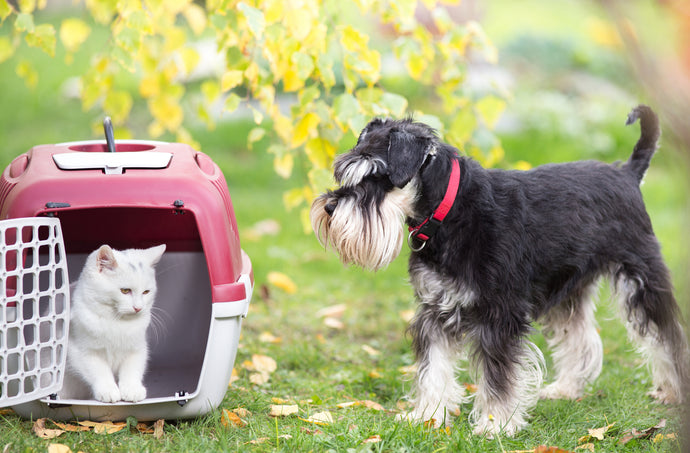 Navigating Air Travel with Dogs and Cats