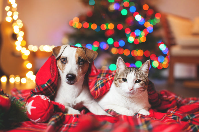 Holiday Pet Picture Tips For Photos You And Your Pet Can Be Proud Of