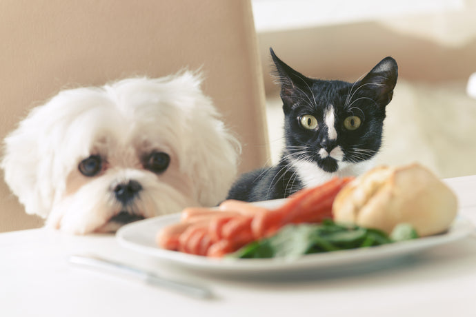 Table Scraps Pets Cannot Have, Part One
