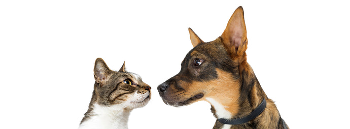 The Furball War Continues: 14 Differences Between Dog and Cat People