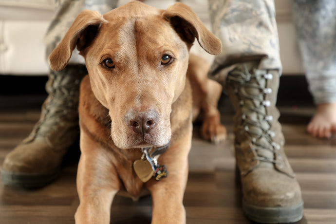 Dogs of War: A Veterans Day Essay