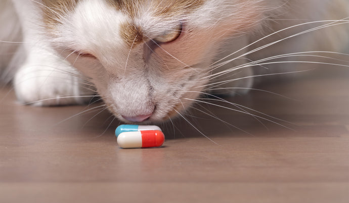 How to Ensure You Don't Get Swindled by an Online Pet Pharmacy