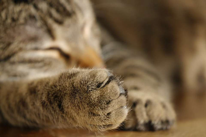 Considering Declawing Your Cat? Think Twice