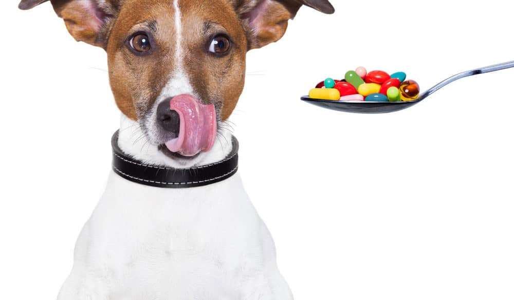 How to Save Big Bucks On Your Pet's Medications