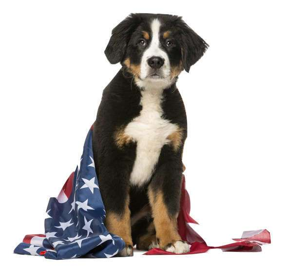 Pet-Safe Celebrating on the 4th of July