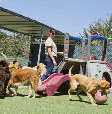 Check and Double-Check: Pet Boarding Industry Remains Unregulated