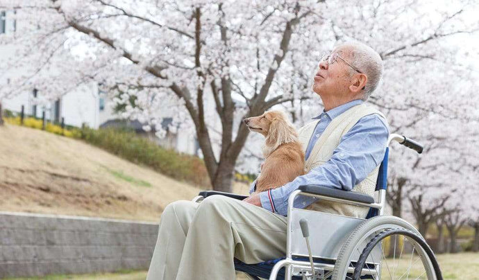 Pets Provide Big Benefits to Senior Homes