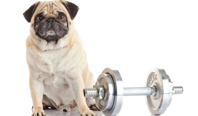 Does Your Pup Need Exercise? Hit the Puppy Gym!