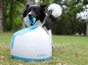 automatic-ball-thrower-for-dogs