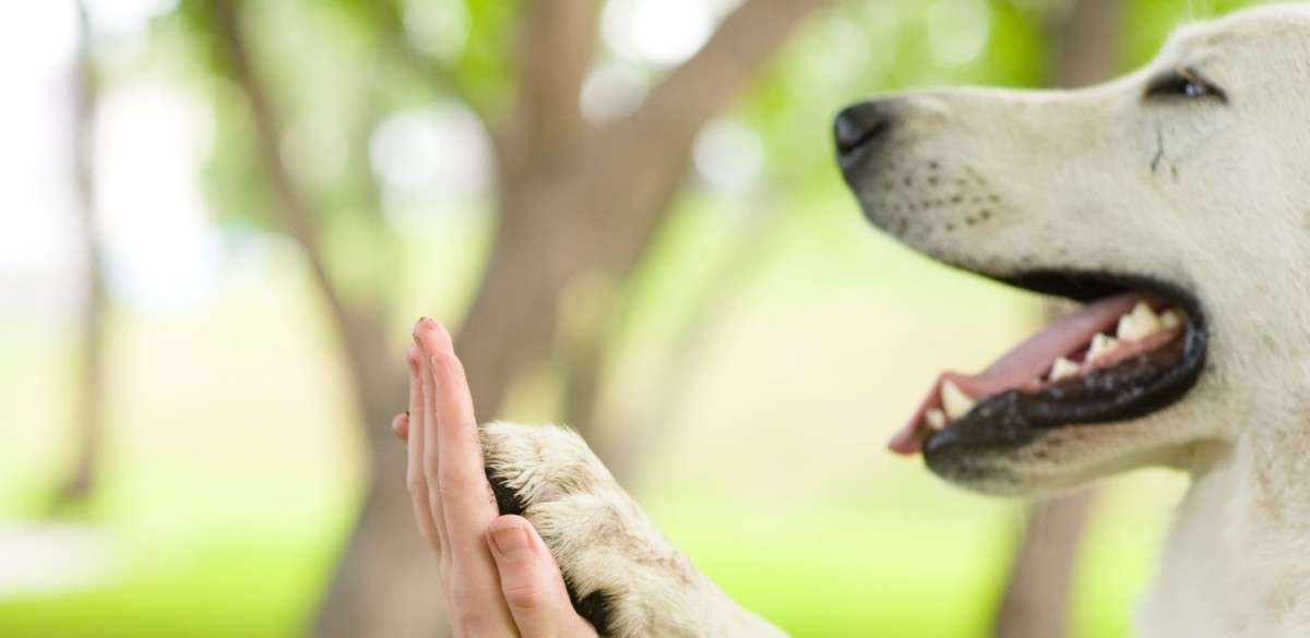 Give me five - dog pressing his paw against a woman hand