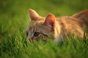 Homemade Cat Repellents To Keep Your Furniture And Garden
