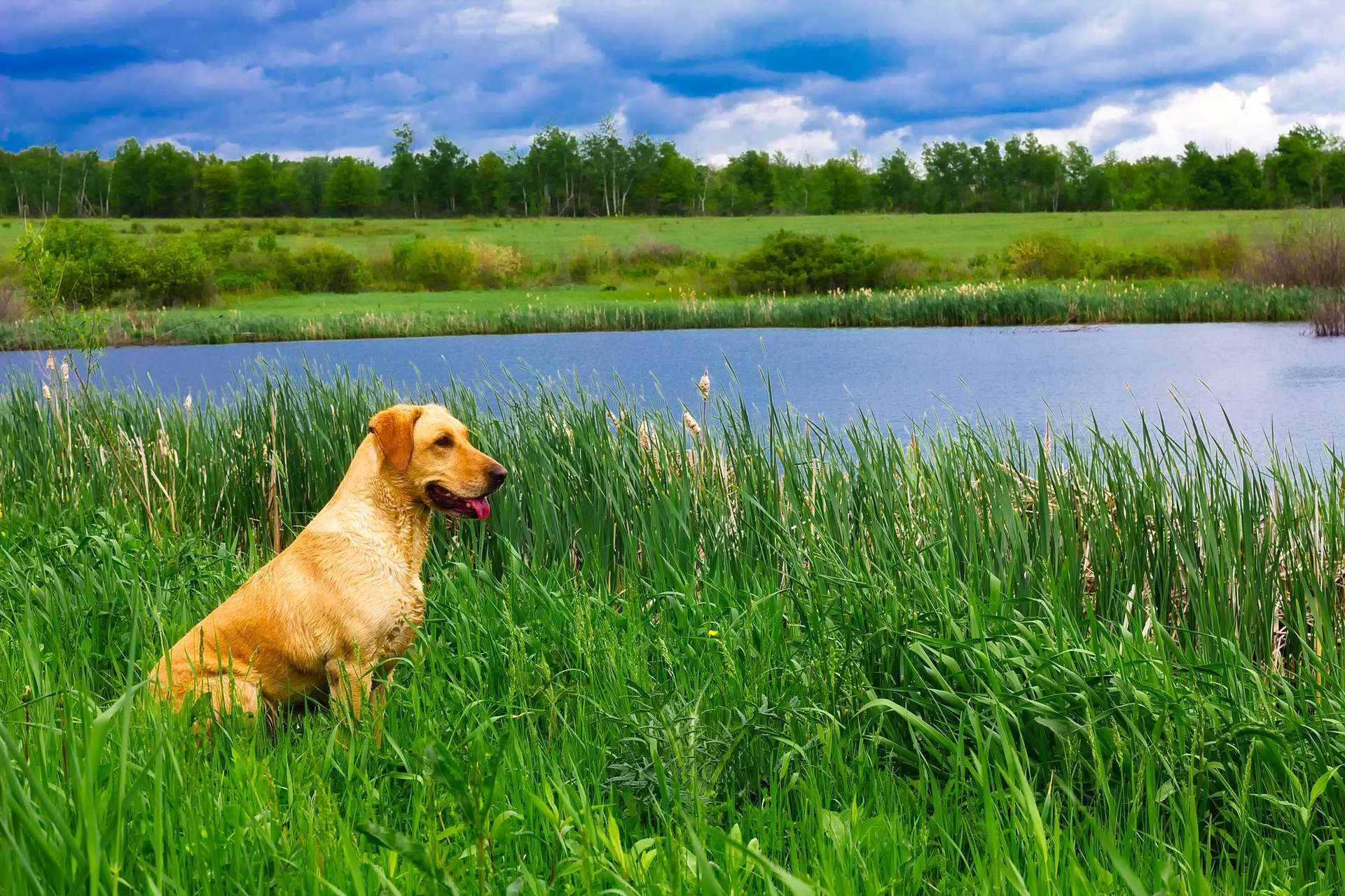 a dog sitting on a river bank