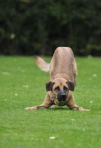 68% of dogs ate plants and grass daily or weekly