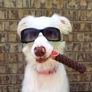 Doggie Cigars
