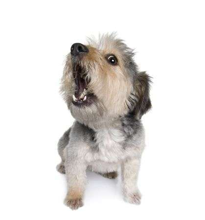 A constantly barking dog can wear on your nerves.