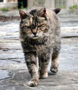 Originally feral cats may dislike grooming themselves.