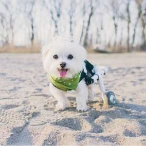 Cutie-earthrated-Specially-Abled Dogs and Cats