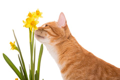 poisonous-plants-cats-vet-organics