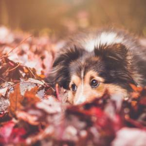 dogs in autumn