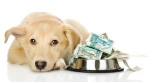dog-expenses-and-expectations